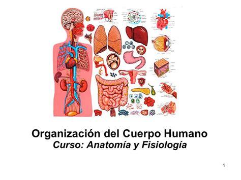 imagenes virtuales del cuerpo humano anatomia del cuerpo humano