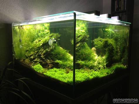 aquarium 100 l 100l cube flowgrow aquascape aquarium database