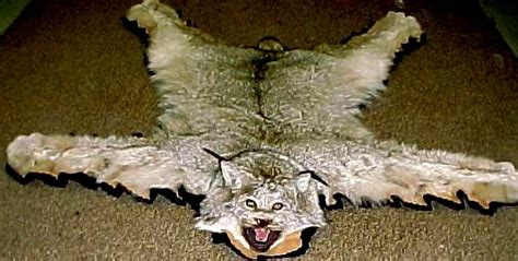 lynx rug lynx open rug alaska wilderness arts and taxidermy