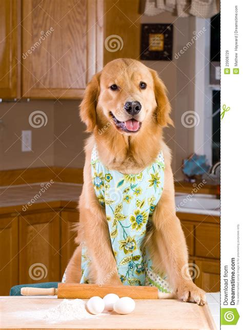 cooking dogs cooking royalty free stock images image 23908729