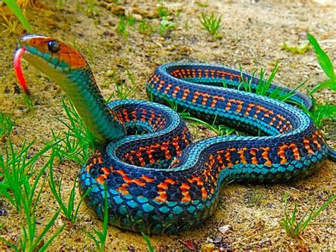 snake of many colors 171 pensandpaintings