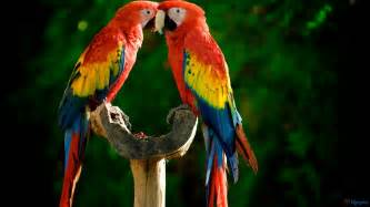 macaw colors now what does your parrot try to say pet attack