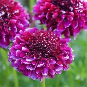 Silver Flower Vase Scabiosa Barocca Dobbies Garden Centres