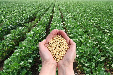 alimenti contengono soia soia alimento sano leggo tenerife
