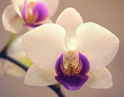 nomi di fiori in inglese significato orchidea simbologia a chi si regala e perch 233