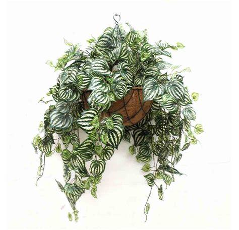 best indoor hanging plants 13 best indoor hanging plants livinghours