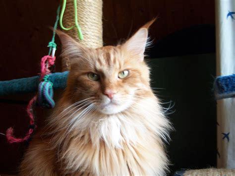 katze pinkelt in wohnung hunde katzen tier naturschutzverein niederberg e v