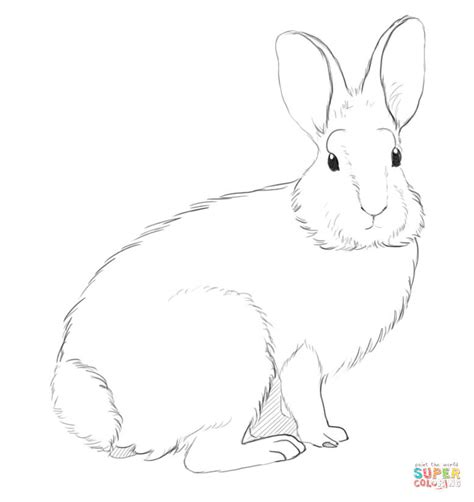 cottontail rabbit coloring page mountain cottontail rabbit coloring page free printable