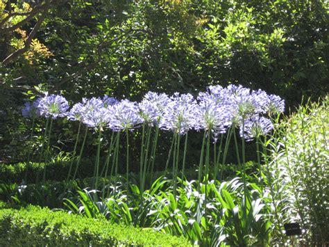 potential flowers garden 731