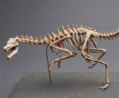 Origami Dinosaur Skeleton - a history of origami museum a history of