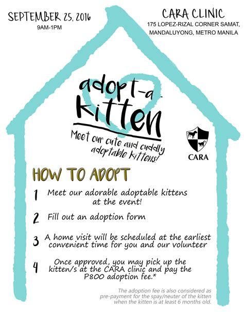 adoption events cara welfare philippines 187 archive 187 kitten adoption event maxine