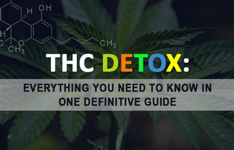 Is It Possible To Detox Thc In One Day by Thc Detox The Definitive Guide Tips Facts Methods