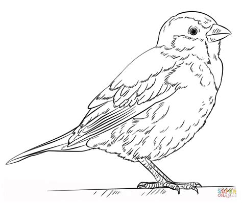 coloring page of house sparrow house sparrow coloring page free printable coloring pages