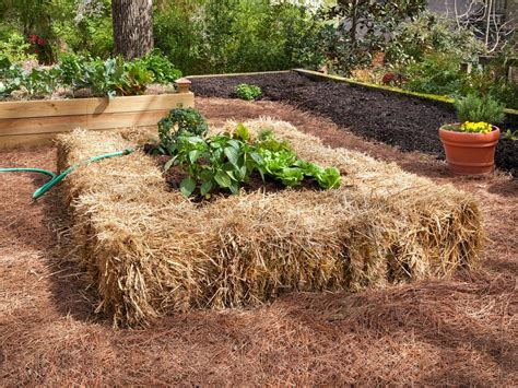 straw bale gardening tips hgtv