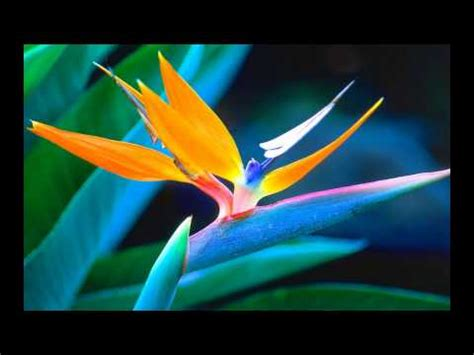 foto fiori piu belli mondo i fiori pi 249 belli mondo