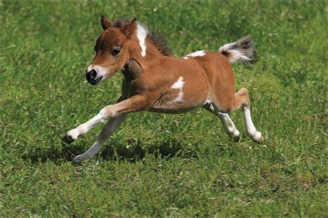 Quizz Le Cheval Et L Equitation Quiz Equitation Chevaux