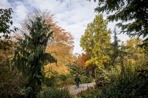 Botanical Garden Seattle Fall S In Its At Bellevue Botanical Garden The Seattle Times