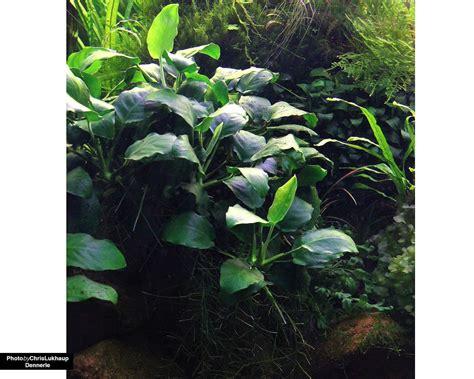 Ideen Gartengestaltung 4581 by Ich Habe Fertig Nana Aus