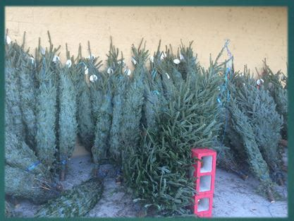 real christmas tree cost walmart where to get a tree my winter fl