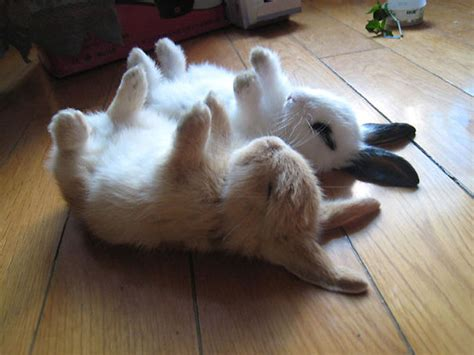35 Of The Cutest Bunny Rabbits Are Cuteness Overload.