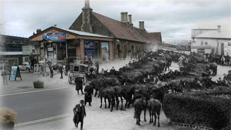 world war one at home minehead somerset wagonloads of mules