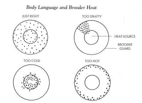 the diagram illustrates a small portion of several myofibrils this diagram illustrates how to tell if your brooder is