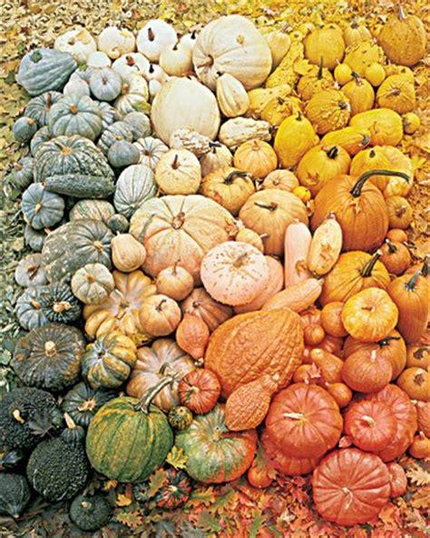 what color are pumpkins bohemian pumpkin color palette