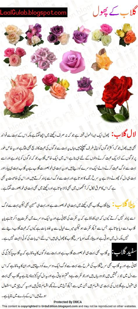 Roses Essay by Urdu Essay Phool Par Mazmoon Gulab Urdu Essay Mazmoon Urdu Speech Notes Paragraph Essay
