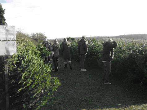 badgerhillchristmastreefarm co uk