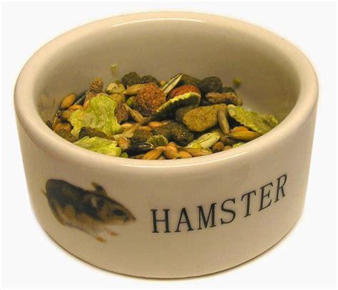 Makanan Hamster Dan Hewan Pengerat Biji Bunga Matahari 400grm makanan yang baik dan yang harus dihindari untuk hamster pets lover indonesia