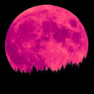 what is a pink moon pink thing of the day pink moon the worleygig