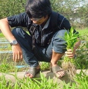 Jual Alat Hidroponik Di Cirebon bertanam hidroponik home