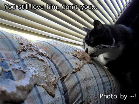 vomit on couch ambivalent about owning your cat