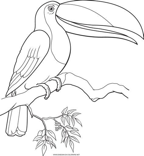 coloring pages of toucan birds dibujos para colorear tucanes imagenes infatiles