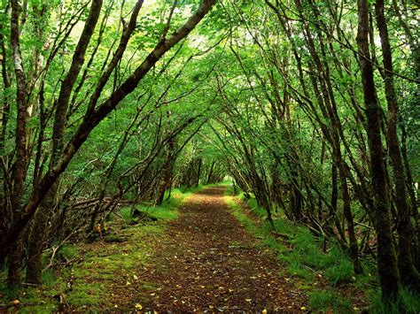 Search On Path Nature Forest Path Wallpaper Picture 504 Wallpaper High Resolution Wallarthd