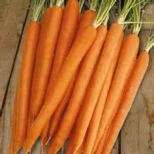 Jual Bibit Wortel Kuroda bibit wortel kuroda jepang