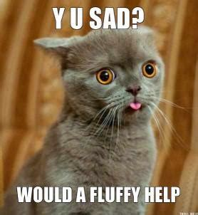 Help Meme - fluffy cat memes image memes at relatably com