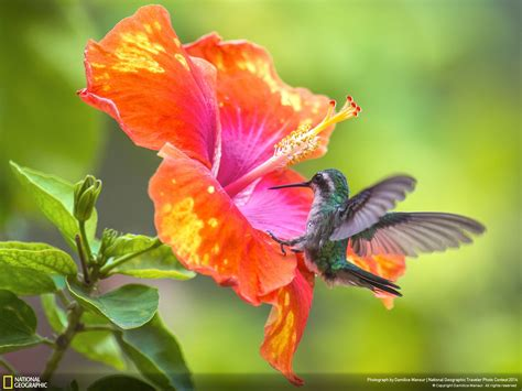 flower wallpaper national geographic photo collection national geographic flowers wallpapers