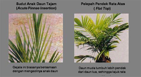 Polybag 30 X 25 Cm Tidak Lubang the palm planters pembibitan bmp 2