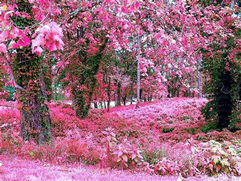Pink Garden garden wallpapers wallpaper cave