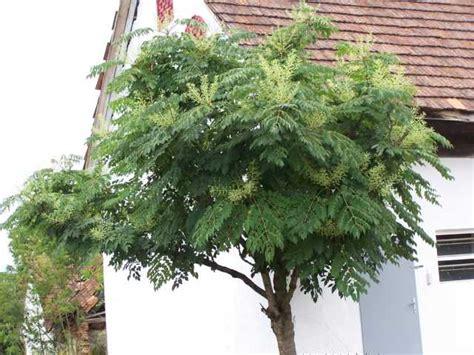 Baum Mit Stacheln 5014 baum mit stacheln bilderbuch d sseldorf stadthalle baum