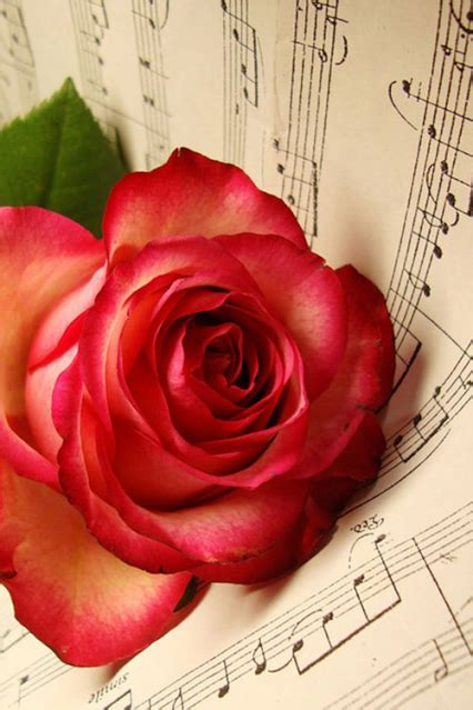 imagenes de rosas musicales pinterest