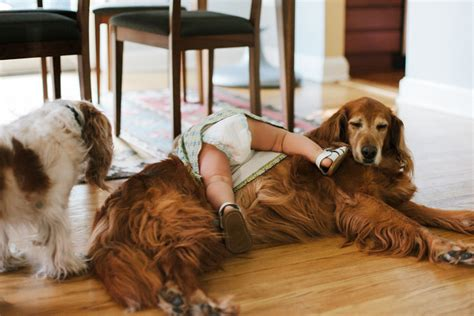 dog with a blog house 10 house hunting lessons you can learn from your dog trulia s blog real estate 101