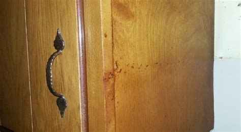 remove greasy buildup from wood cabinets simply good tips remove greasy buildup from wood cabinets simply good tips
