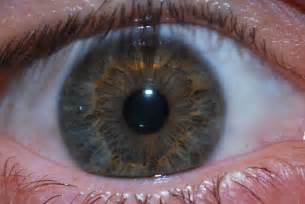 eye color hazel file hazel eye 2 jpg wikimedia commons