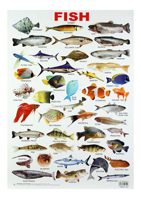 Kitchen Furniture Names buy dreamland fish chart online in india kheliya toys