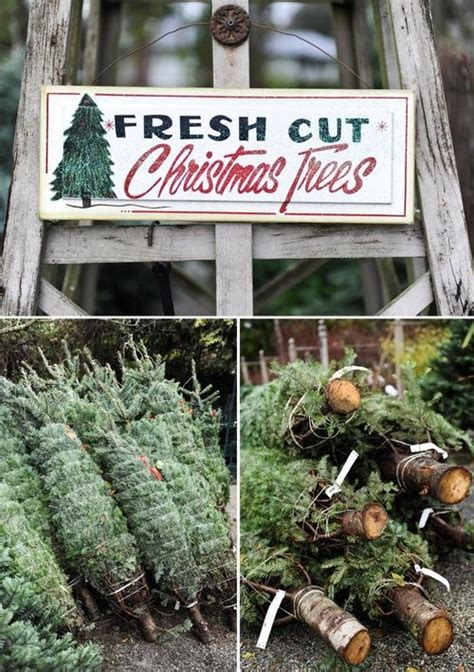 how to care for a fresh cut christmas tree in florida fresh cut trees pictures photos and images for and