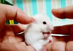 Surprised Gif Surprised Gif Find On Giphy