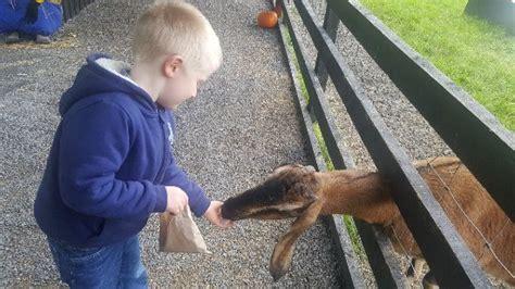 glendeer pet farm athlone updated december  top