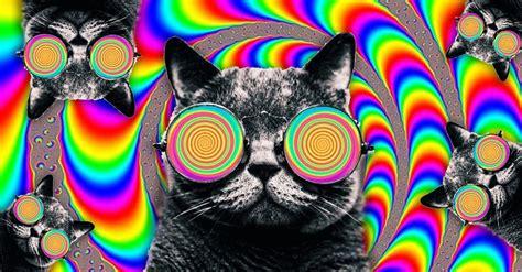 imagenes opticas de animales 14 ilusiones 243 pticas que har 225 n explotar tus ojos y tu cerebro